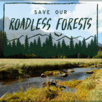 ACTION COMPLETE: Oppose the Repeal of 9 million acres of Ancient Forest Protections in Alaska's Tongass National Forest