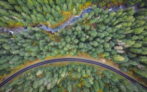 Aerial image of a forest with a road and river running parallel to one another