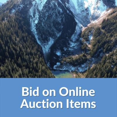 Bid on Online Auction Items