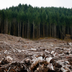 TAKE ACTION: Lawless Logging Bill Passes House Committee, Threatens National Forests