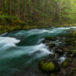 Conservation Groups Support Forest Service Watershed and Road System Improvements on Olympic National Forest