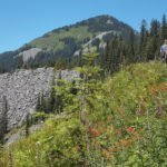 Groups Provide Input on Recreation Impacts of Planned Timber Sale near Snoqualmie Pass