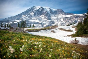 Mt Rainier Paradise, Photo Courtesy of Anne Campbell.
