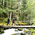 Organizations Support Balance of Watershed Restoration and Recreational Access on Olympic National Forest