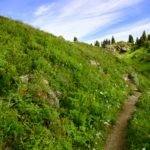 More than 60 Conservation Organizations Support Funding for Legacy Roads and Trails Program