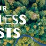 Celebrate the 20th Anniversary of the Roadless Rule by Signing the Petition to Save Our Roadless Forests