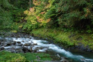 Sol Duc River near Salmon Falls. Photo Courtesy of Thomas O'Keefe.