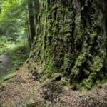 New Wilderness in Washington – Thunder Creek