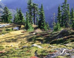 West Cady Ridge in the Wild Sky Wilderness. Photo Courtesy of Steven Fey.