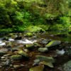 Creek on the Olympic Peninsula, Photo Courtesy of Javin Elliff
