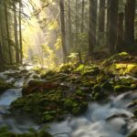 TAKE ACTION: Thank Rep. Adam Smith for adding public lands and rivers protections to the NDAA