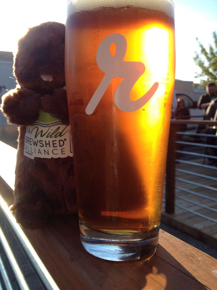 Baker Beaver with a Beer from Reuben's Brews, Photo Courtesy of WA Wild.