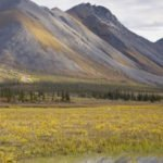 PAST ACTION: Senate Passes Legislation Allowing Drilling in the Arctic Refuge